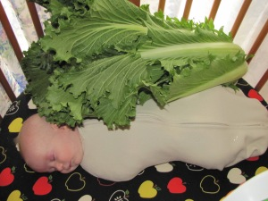 Napa Cabbage vs baby