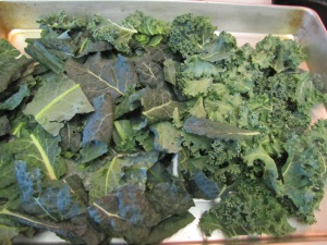 Curly & Dino - Ready for Kale Chips!